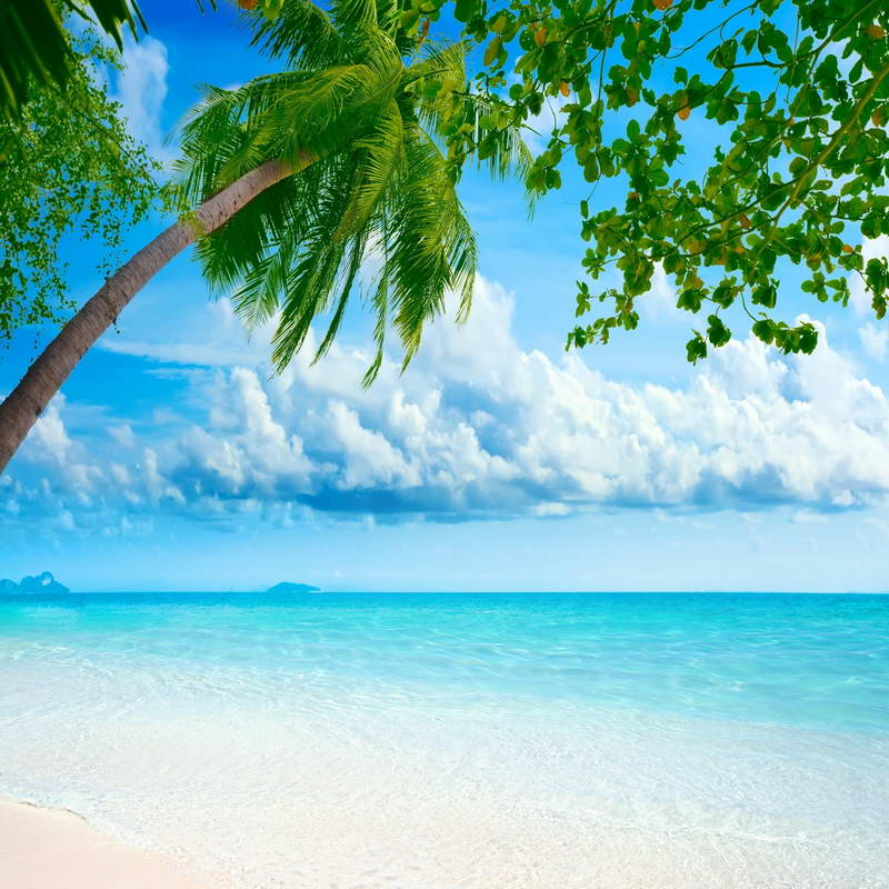Blue Sky White Clouds Palm Tree Sea Beach backdrop polyester or Vinyl cloth High quality Computer print party background