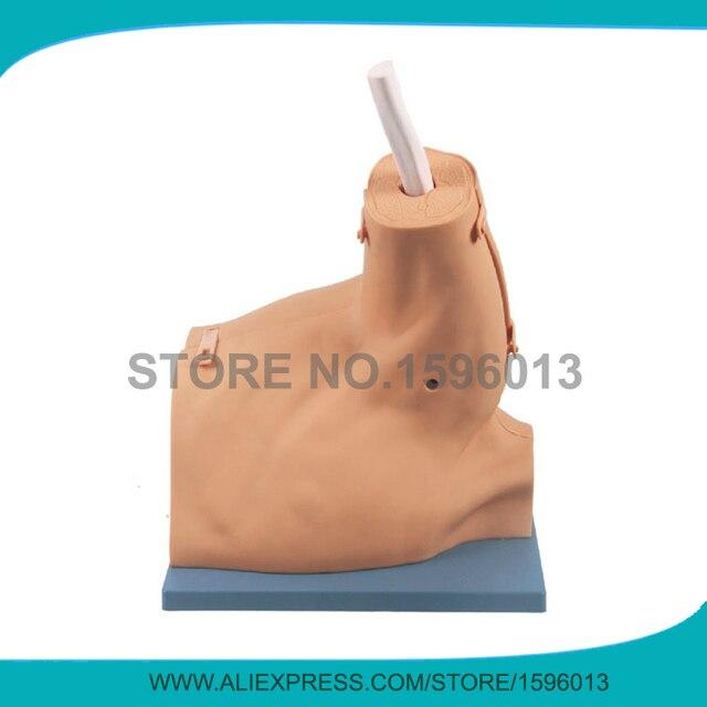 Advanced Shoulder Arthroscopy Model, Medical Arthroscopic ...
