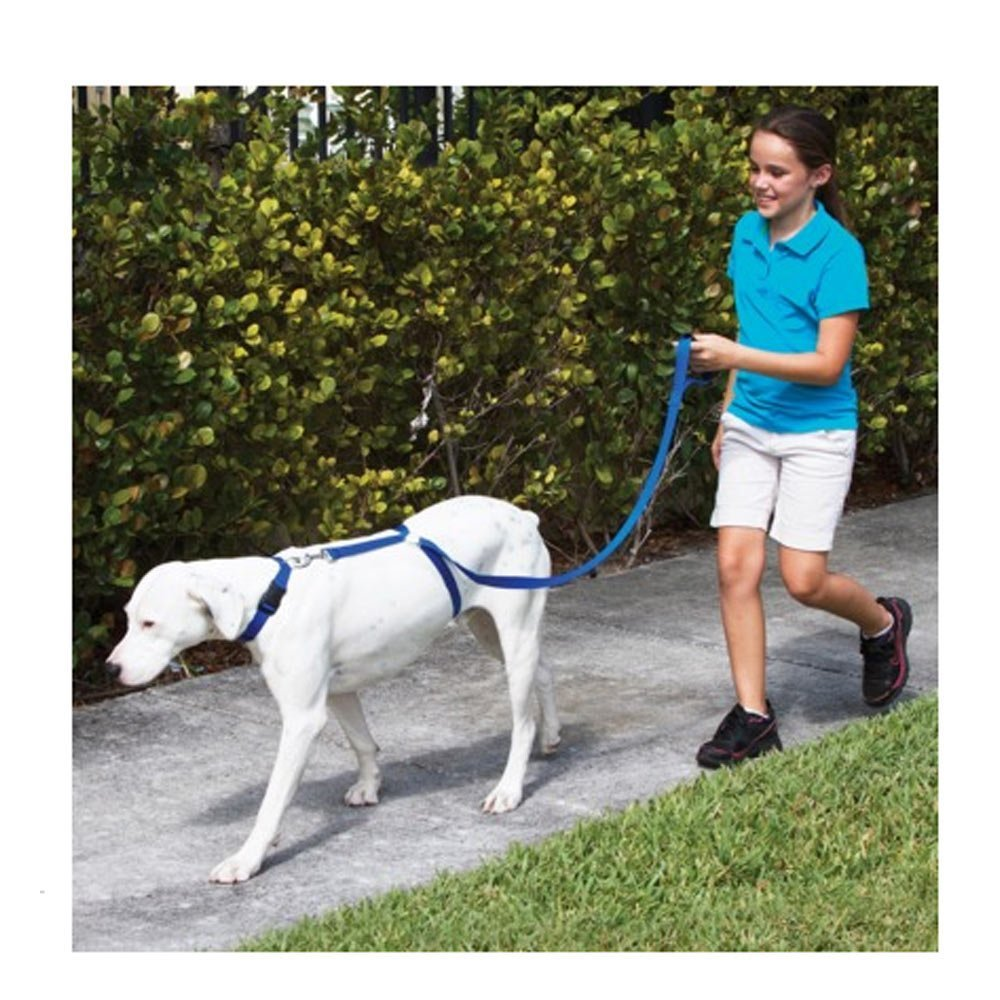 Training Leash For Dogs As Seen On Tv