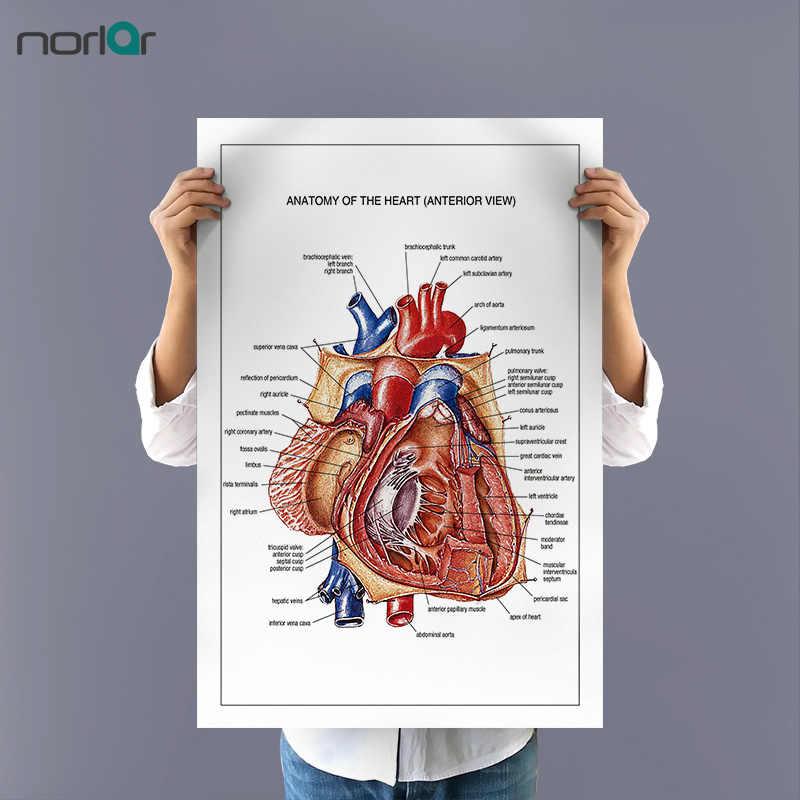 Холст без рамки, картина, сердце, анатомия, искусство, постер, настенное изображение, образование, печать, холст, печать, художественный декор стен