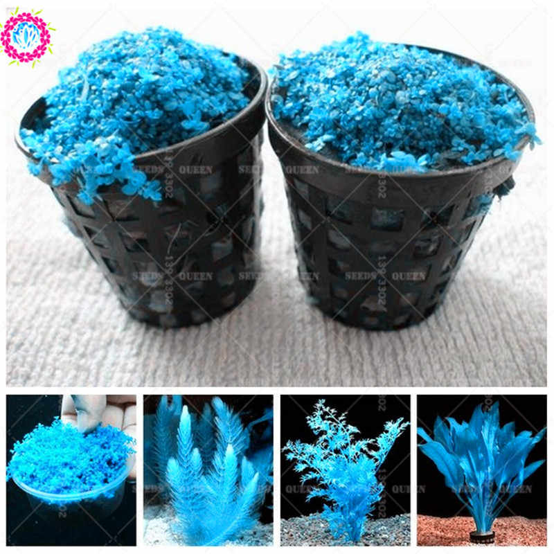 500pcs Blue Live Fern Moss Aquarium Grass Diy Fish Tank