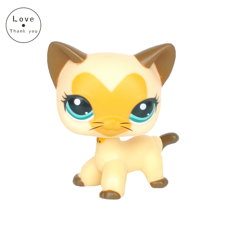 Pet toys Short Hair cat 3573 Tan Brown Heart Face with blue eyes kitty pet standing