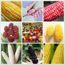 9 Varieties Corn Seeds  Vegetable Furit Kind Easy-growing Red White Yellow Black Purple etc