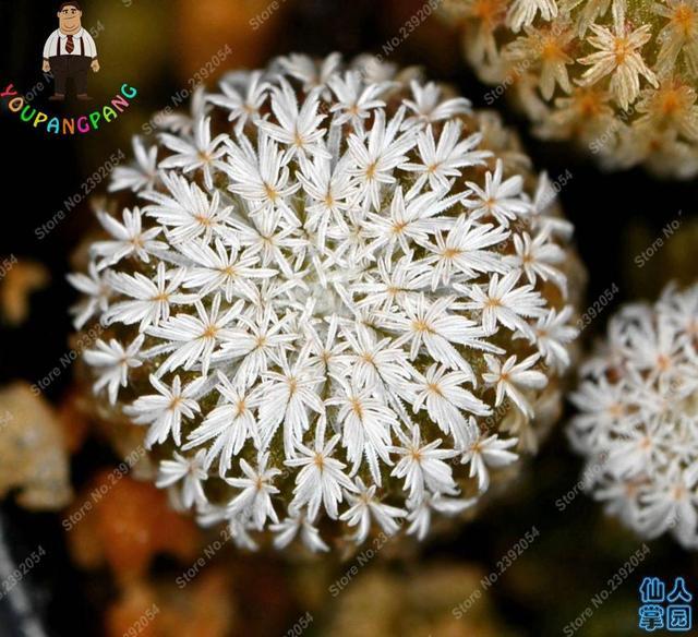 100PCS Mixed Succulents Cactus bonsai Plants Homes Gardening Flower Pots Balcony Flowers