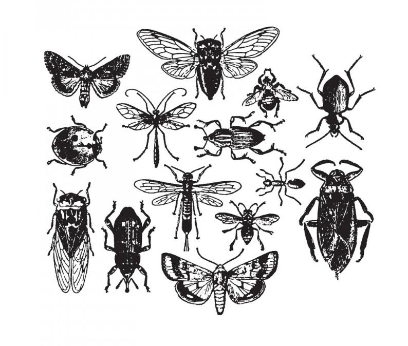 Entomology Transparent Clear Silicone Stamp/Seal For DIY Scrapbooking/photo Album Decorative Clear Stamp Sheets   A1714