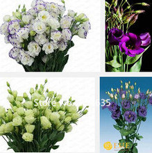 Garden Plant Sales promotion! 200 pieces eustoma seeds, potted seeds exotic, flower seed DIY home office decoration Bonsai Seed