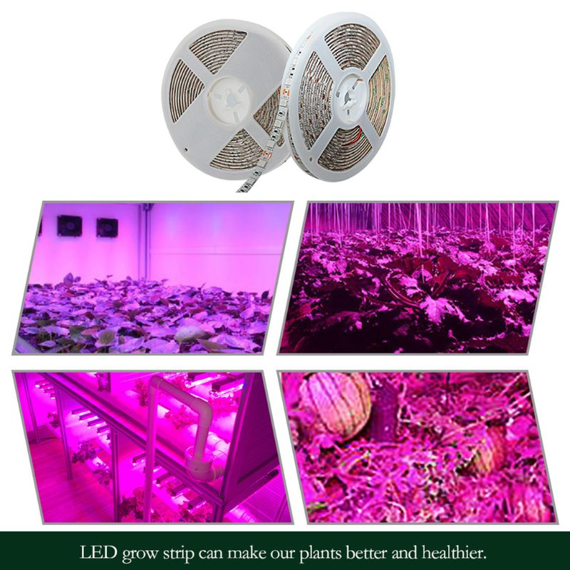 5m Full Spectrum Plant Growth LED Strip Light 5050 Chip LED Grow Lamps For Greenhouse Hydroponic Plant