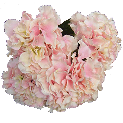 Acheter En gros 5 * Artificielle Fleur D'hortensia 5 Grosses Têtes Bounquet (Diamètre 7