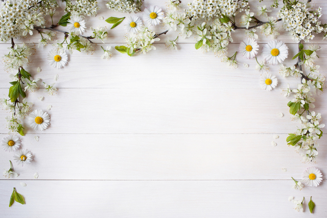 bridal shower decorations wedding photo booth candy bar background for photo session xt6951