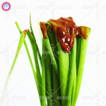 100pcs Chinese Chopped Green Onion Seeds Perennial Herb Plants Vegetable Seeds 4Seasons Sowing Flavor Home Garden Beat packaging