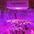 Hot Sale 200w Full Spectrum Led Grow Lights LED Horticulture Lighting for Medicinal Plant Growth Flowering Stocks in USA Germany