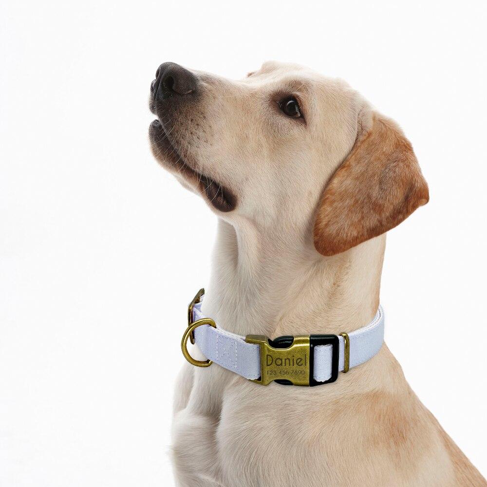 HTB1SZl7biDxK1Rjy1zcq6yGeXXaG - Halsband hond met naam en telefoonnummer vintage uitstraling