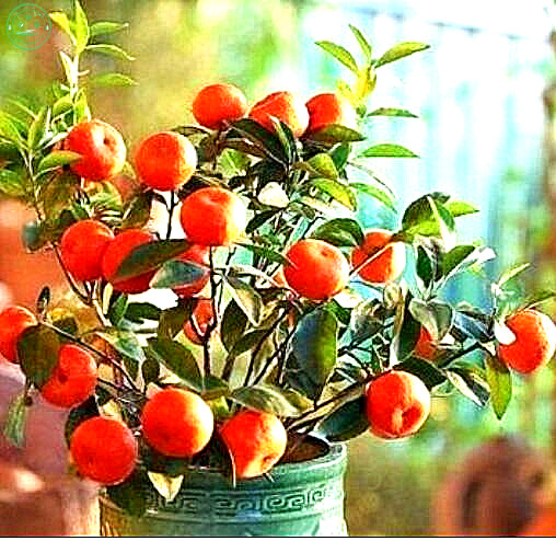 Awesome Indoor Fruit Tree Pictures - Amazing Design Ideas - luxsee.us