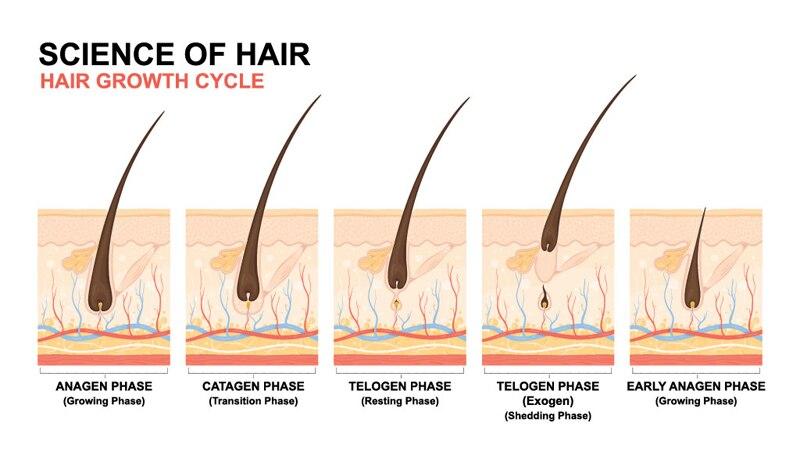 Unissex calvície anti queda cabelo crescimento soro