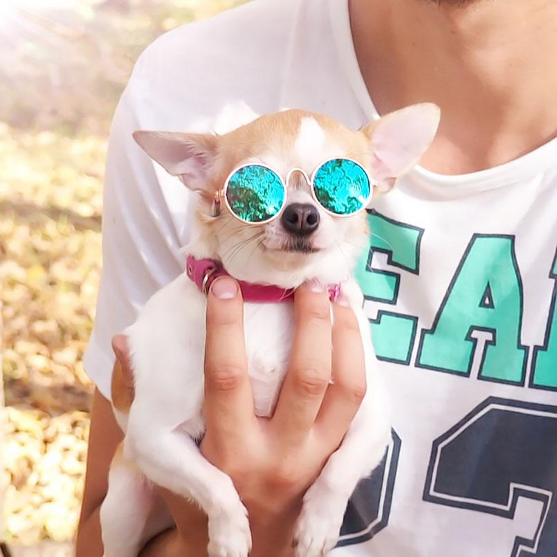 Dog Cat Pet Glasses Sunglasses Little Dog Eye-wear Photos Props Dog cat Accessories Pet  ...