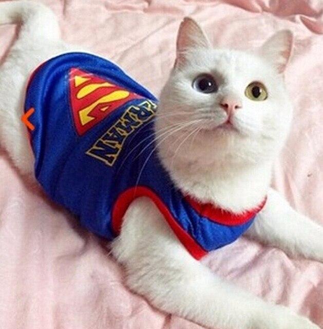 Aliexpress.com : Buy Very Cute New Super cat clothes pet costume ...