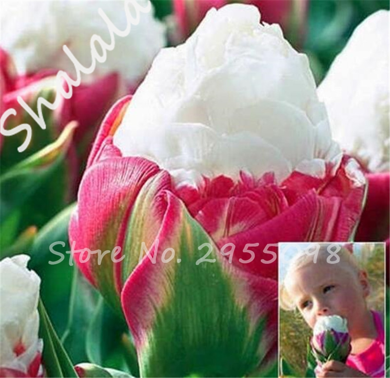 Распродажа луковиц и семян цветов