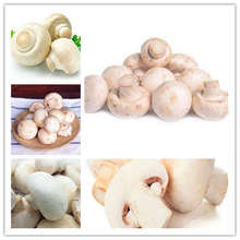 200 Pcs/Bag Delicious White Mushroom bonsai plant Green Vegetables Bonsai Home vegetable garden decoration potted planting