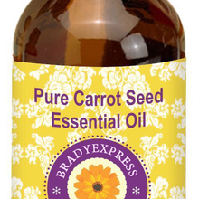 FRee Shipping Pure Carrot Seed Essential Oil (Daucus carota)