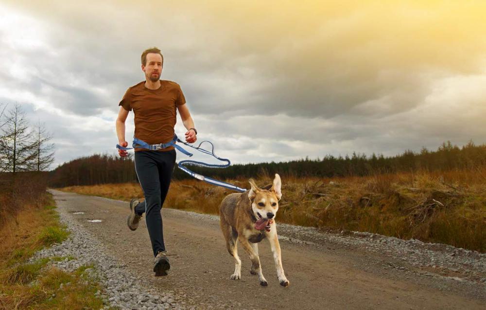 Laisse de chien de laisse d'animal familier de 3 couleurs peut séparer la ceinture en Nylon, sécurité élastique élevée réglable de chaîne de chien libérant la marche de mains