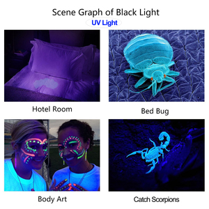 Image 5 - Linterna de LED UV con luz ultravioleta y Zoom, luz negra UV para mascotas, Detector de manchas de orina, caza, escorpión, 5 modos