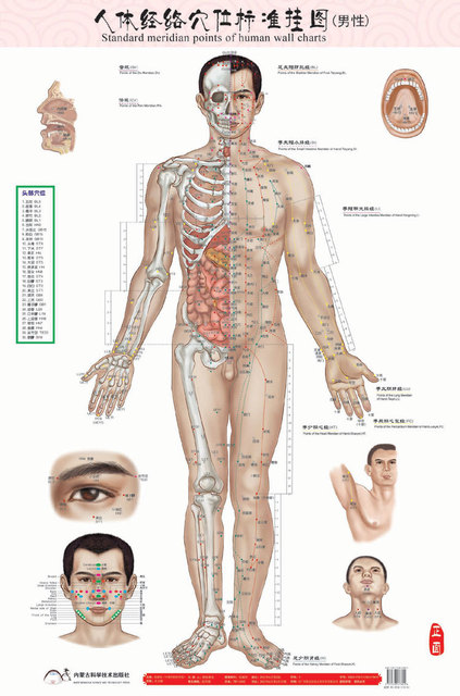 Male Human Meridian Points Wallmap Acupuncture Massage Point Map A