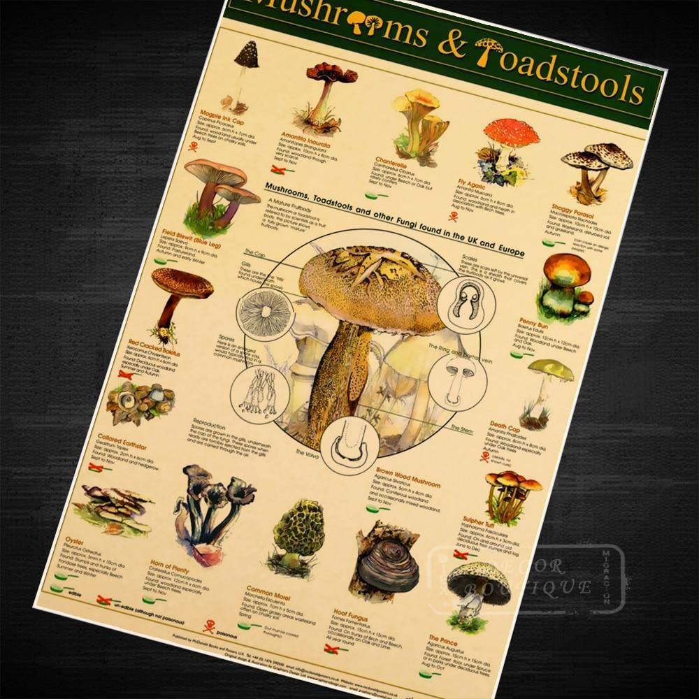 Mushrooms & Toadstools, Fungi Kids education Poster Decorative DIY ...
