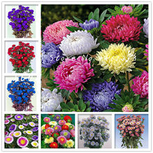 Free Shipping 100 pcs/bag Rare Indoor Flower Aster Bonsai Plants Chinese Chrysanthemum Mixed Color Bonsai for Home Garden Decor(China)