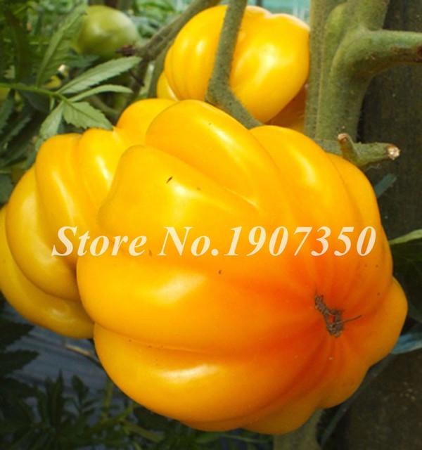 Big Sale ! Hot 100 Pcs Big Beef Hybrid Tomato Bonsai Extra-Large, Extra-Meaty,Extra-Tasty Organic Fruit & Vegetable Bonsai Plant