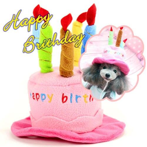 Gelukkige Verjaardag Hond Puppy Katje Cap Hoed Poedel Hoofdtooi
