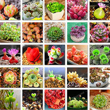 300pcs/lot Mix Lithops Seeds Mix Varieties Succulents Seeds Succulents Bonsai Home Garden Ornament Potted  home & garden