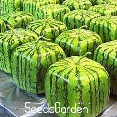 Bonsai Hot Sale!50 Pieces Rare Simple Geometric Square Watermelons Bonsai Delicious Chinese Fruit Water Melon Garden,#w80aqp
