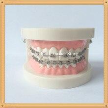 Взрослая Стоматологическая Ортодонтическая модель зубов/Стоматологическая модель комминирования зубов/Группа образование модель зубов