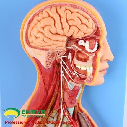 Stichwort: pflanzen nerven; anatomie; autonome nervensystem; in ...