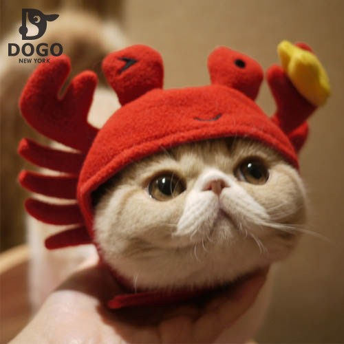 Homemade Cat In The Hat