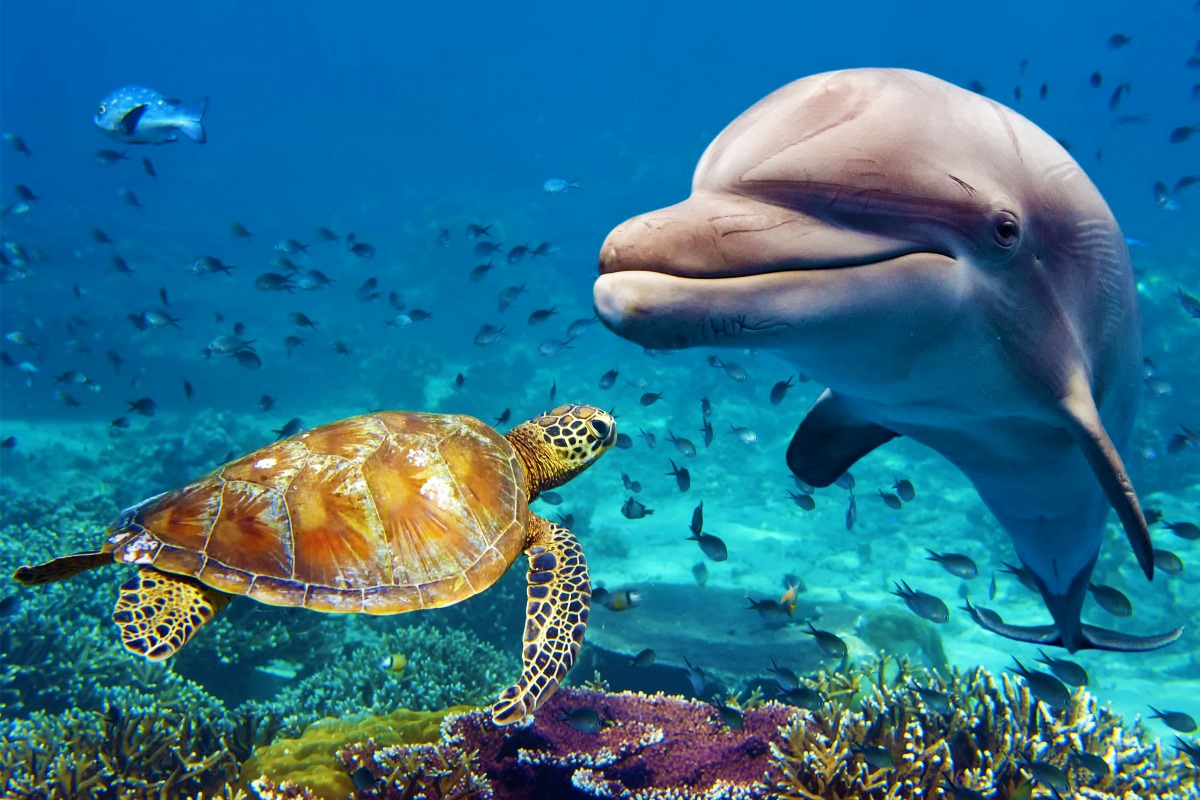 animals underwater sea life fish Dolphin turtle JZK200 ...