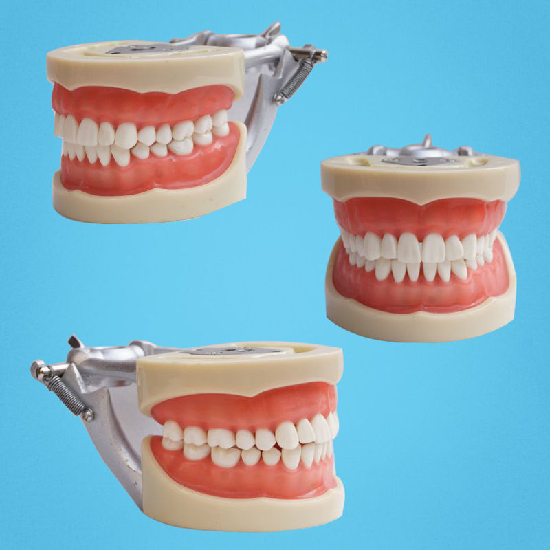 Free Shipping Teeth Teaching Model Dental Soft gingiva 200H Type Removable Teeth hot teeth development models teeth and jaw development model dental teeth models
