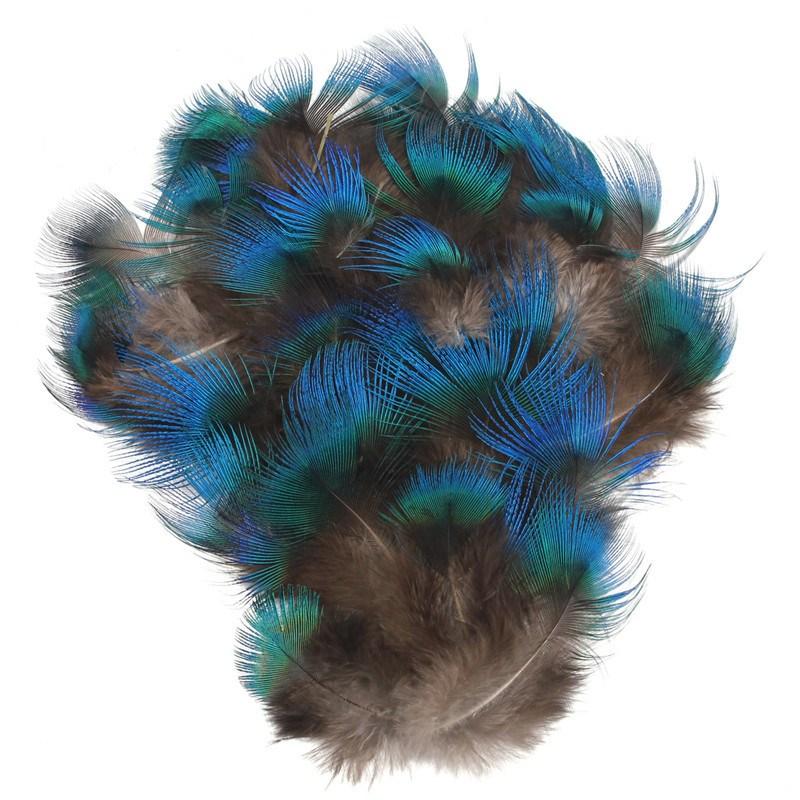 Peacock Feather Diy Craft