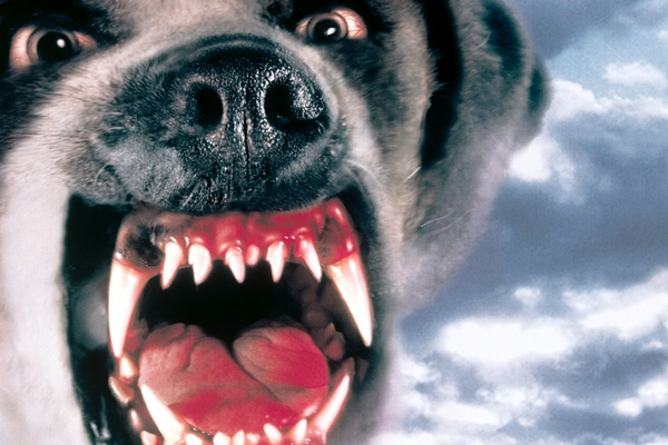 cujo dark horror crazy dog sharp teeth animal 4 sizes home decoration canvas poster print in painting calligraphy from home garden on aliexpress com