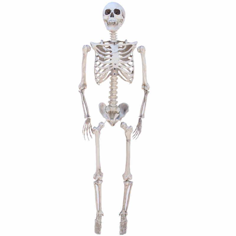 online get cheap human skeleton model -aliexpress | alibaba group, Skeleton