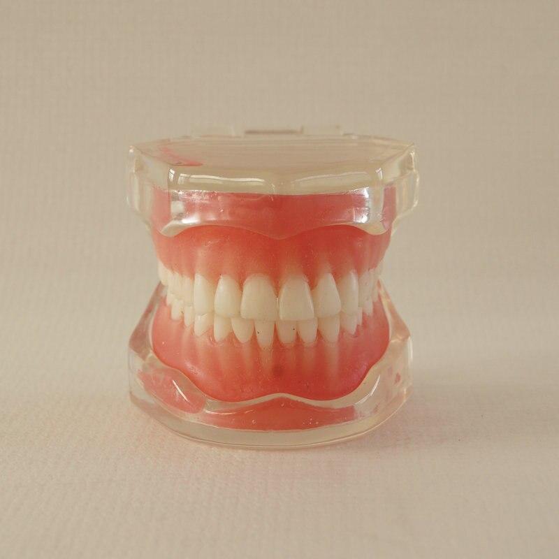 1pc modelo dentes removiveis para 04