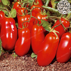 Bonsai Vegetable Hot-Tomatoes Non-Gmo Home-Garden-Plant Greek Organic for And New 100pcs