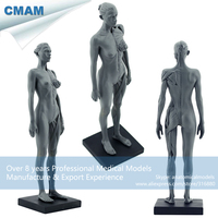 PRC02 Grey Female Sculpture Human Anatomy Model For Medical Drawing