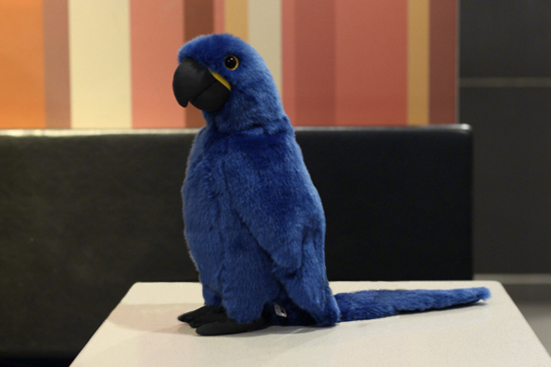 12 Hyacinth Macaw Plush Toys Real Life Blue Parrot Stuffed Animals Toys Soft Bird Toy Birthday/Christmas Gifts12 Hyacinth Macaw Plush Toys Real Life Blue Parrot Stuffed Animals Toys Soft Bird Toy Birthday/Christmas Gifts