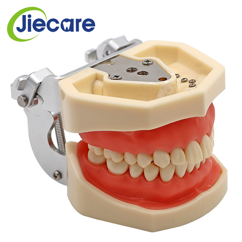 Removable Dental Model Dental Tooth Arrangement Practice Model With 28 pcs Dental Granule and Screw Teaching Simulation Model transparent dental orthodontic mallocclusion model with brackets archwire buccal tube tooth extraction for patient communication