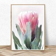 Protea Печать Цветок настенная живопись холст австралийские