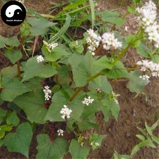Acheter herbe sarrasin graines 200 pcs plante fagopyrum for Acheter plante