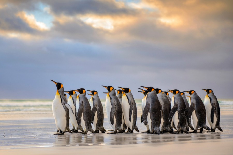 Animal Print Wallpaper Hd Diy Frame Penguins Group At Beach Wild Animal Poster