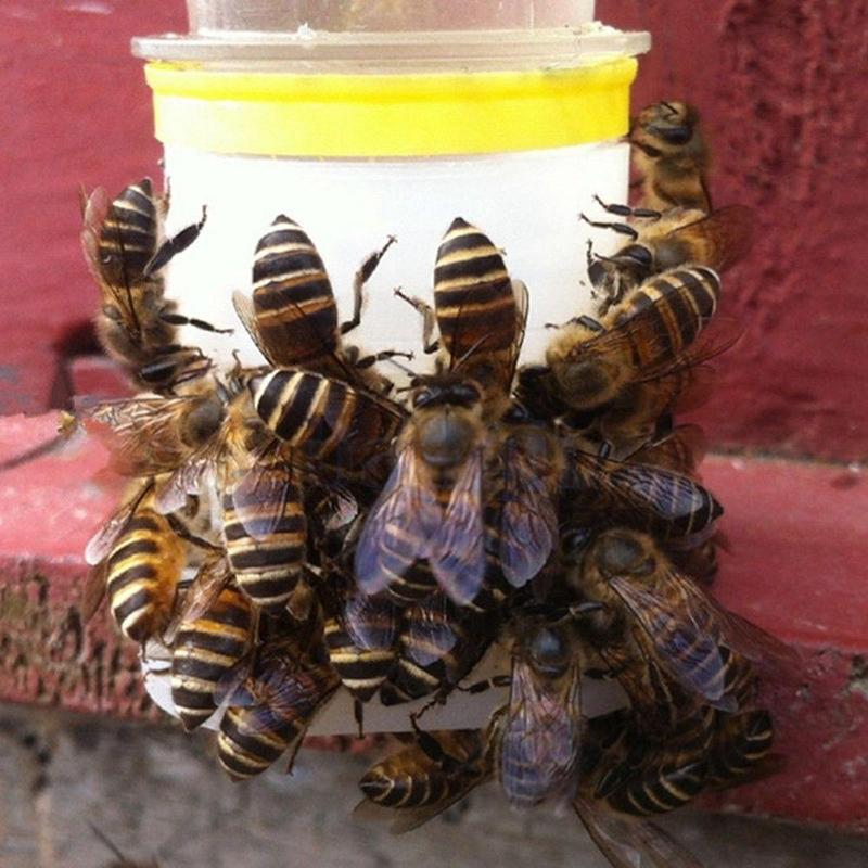 5PCS Bee Feeder Drinking Fountain Bee Queen Bee Drinking Water Equipment Easy Installation Beekeeping Tools