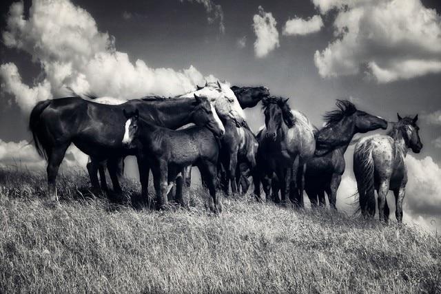 Online-Shop Prairie schwarz-weiß Pferde Familie Tier Poster ...